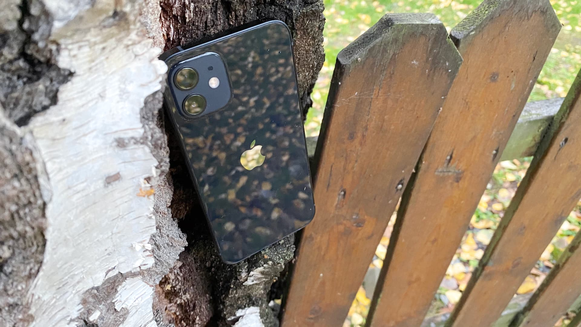 Apple Iphone 12, Svart, i träd, baksida