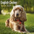 English Cocker Spaniel Calendar 2020 (Pocket, 2019)