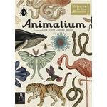 Animalium (Inbunden, 2014)