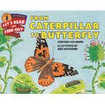 From Caterpillar to Butterfly (Häftad, 2015)