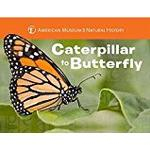 Caterpillar to Butterfly (American Museum of Natural History)