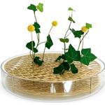 Vaser Klong Äng 40cm Vas