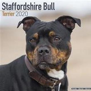 Staffordshire Bull Terrier Calendar 2020 (Pocket, 2019)